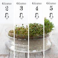 Germogli e fasi di crescita